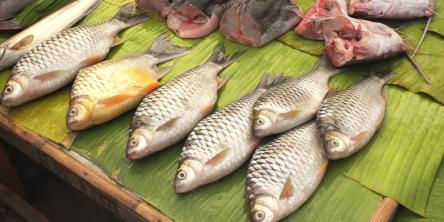 gastronomía en <em>Laos</em>